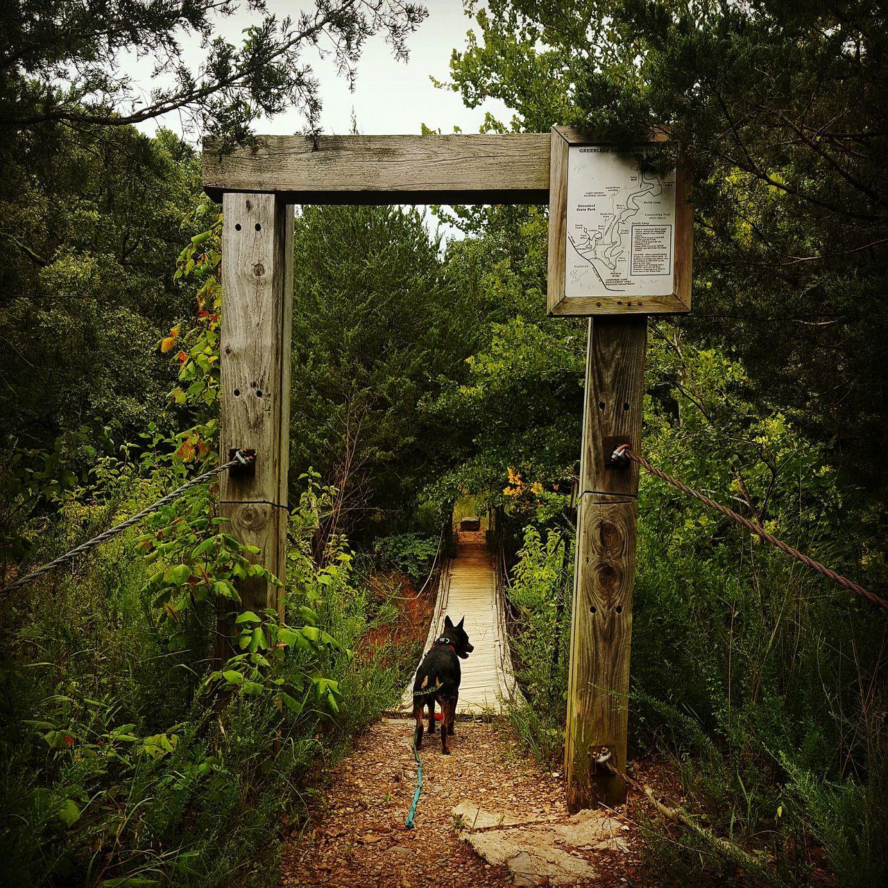 Hiking Good Dog Companion Four-legged Friend Bridge Trail