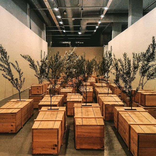 Life from Death Trees Coffins  Museum