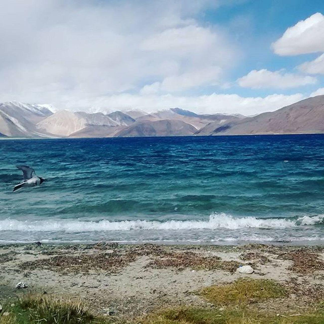 Pangonglake Ladakhdiaries JammuandKashmir