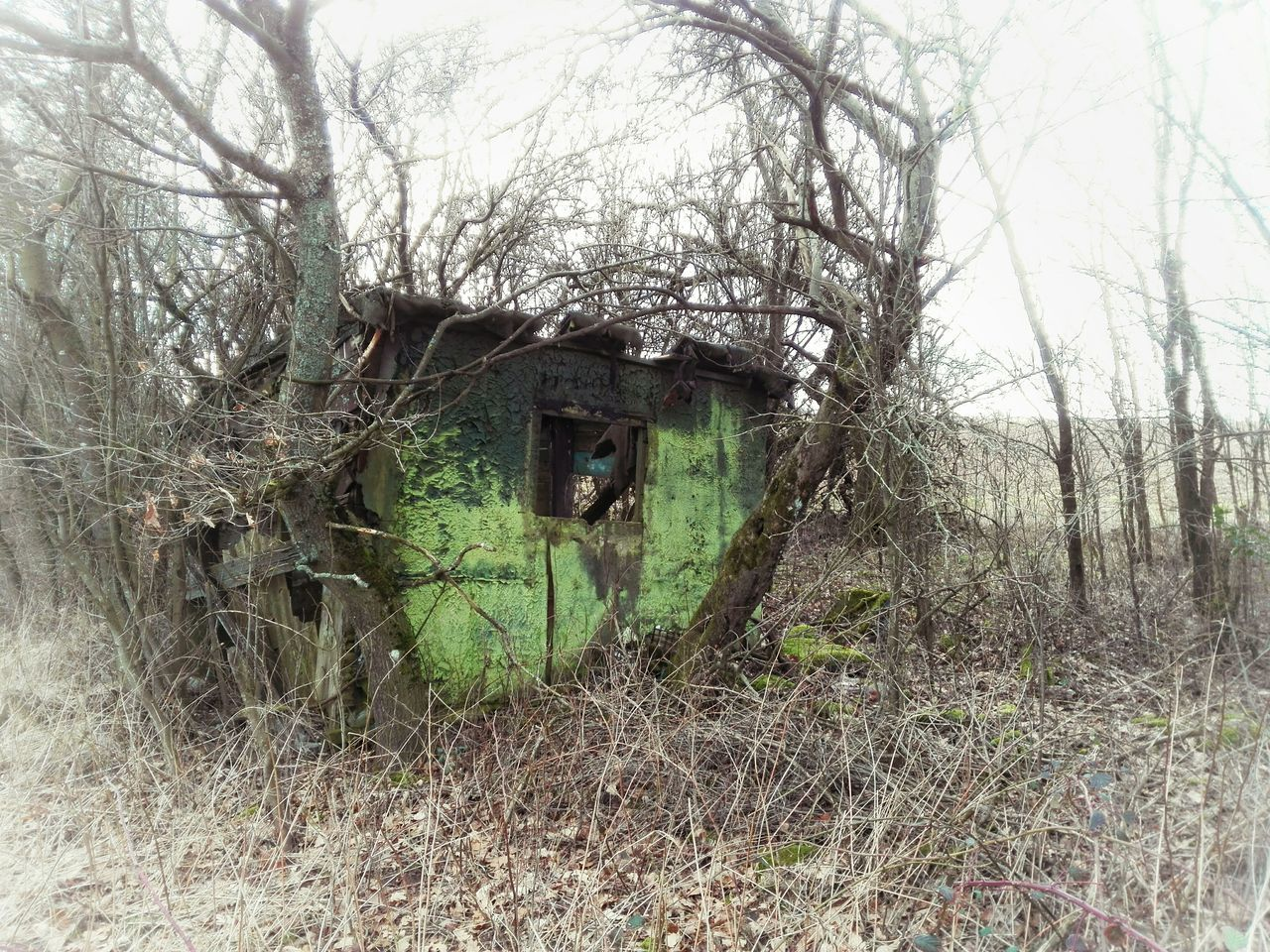 Tree No People Green Color Day Nature Close-up Outdoors Decay Abandoned Deserted Barrack Moss Forest Wabisabi