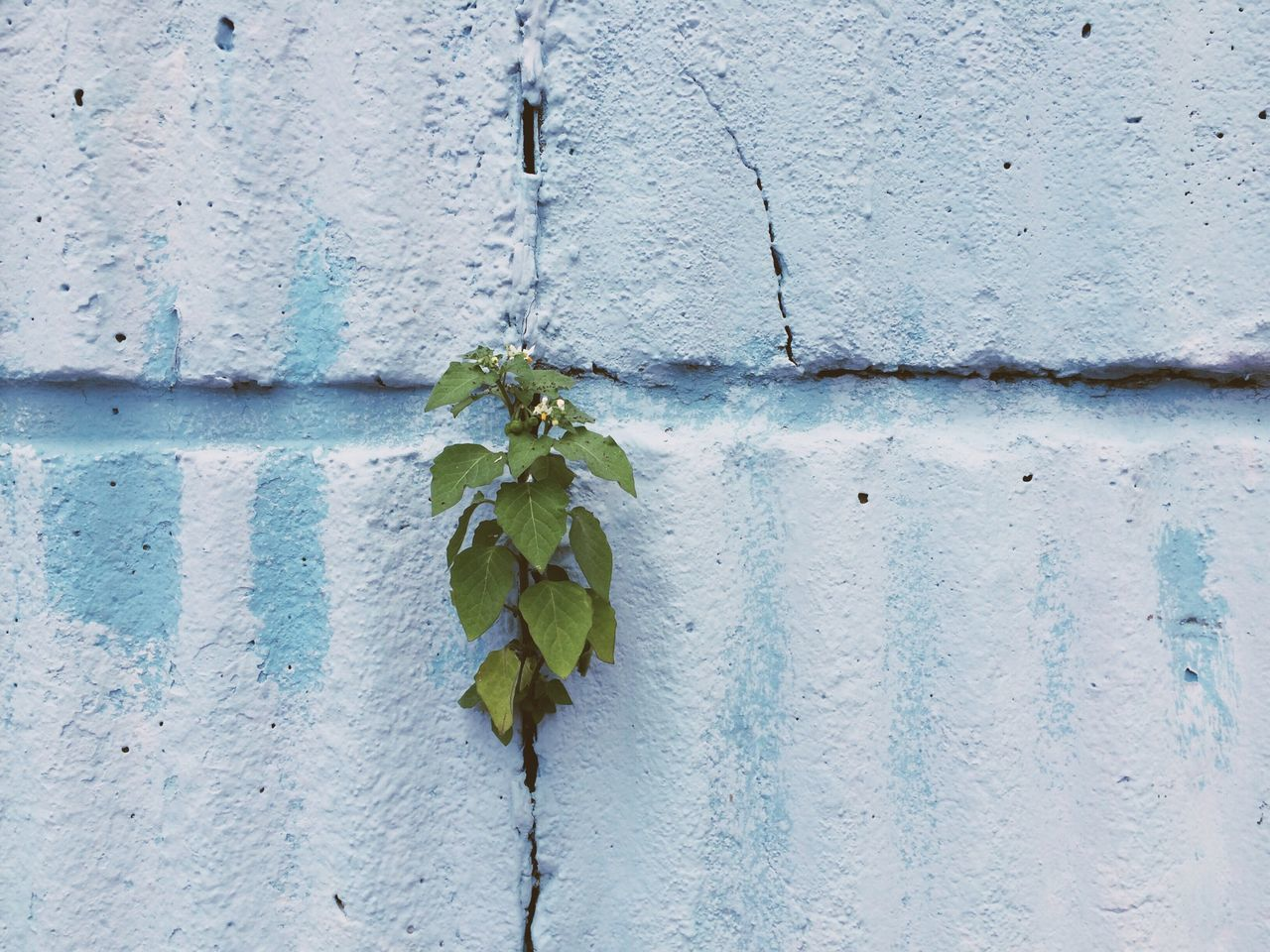 Wallflowers Blue Wall Nature Textures And Surfaces EyeEm Bestsellers
