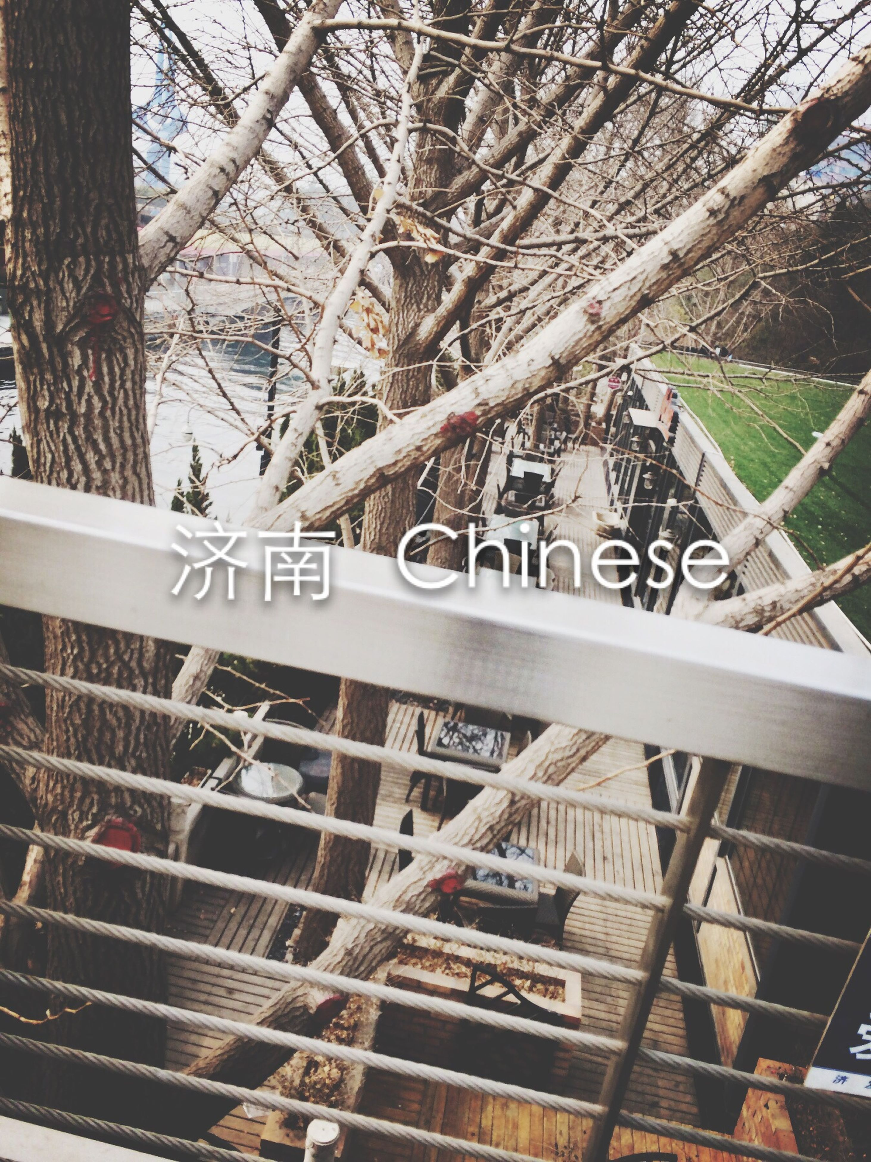 architecture, built structure, tree, building exterior, railing, city, branch, bare tree, day, building, tree trunk, text, outdoors, steps, no people, low angle view, residential building, steps and staircases, fence, staircase