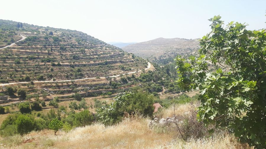 Near East Traveling Machrour Valley Israel Palestinian Territory Valley Hiking Taking A Stroll Palestinian Palestine Machrout Valley Lavender Color West Bank Lavender Field Bayt Dschalla Beyt Jala Beyt Jalla Lavande