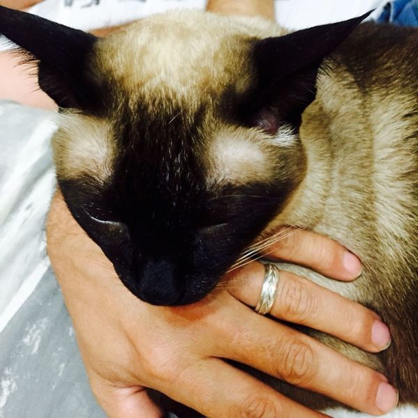 That's Me Hi! I Love My Cats  I Love My Cat Lovecats❤️ Cats Cat Cat♡ Hello World Brasil ♥