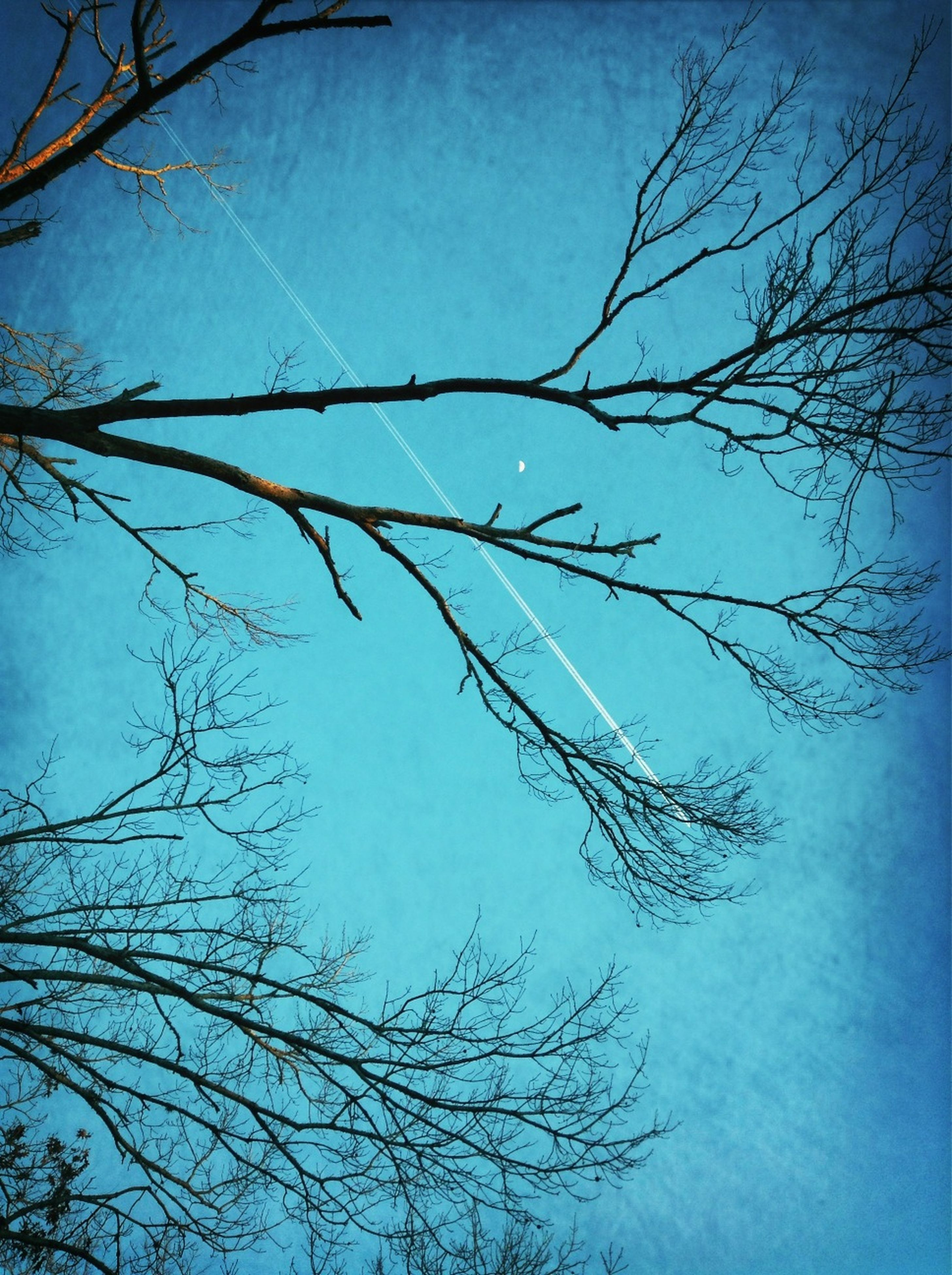 low angle view, bare tree, branch, tree, blue, clear sky, sky, tranquility, nature, beauty in nature, scenics, silhouette, outdoors, high section, day, no people, tranquil scene, growth, dusk, cloud