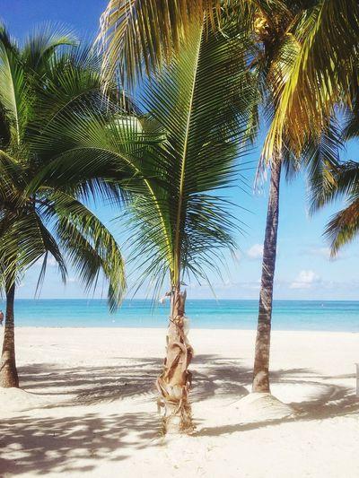 Jamaica Paradise Beach