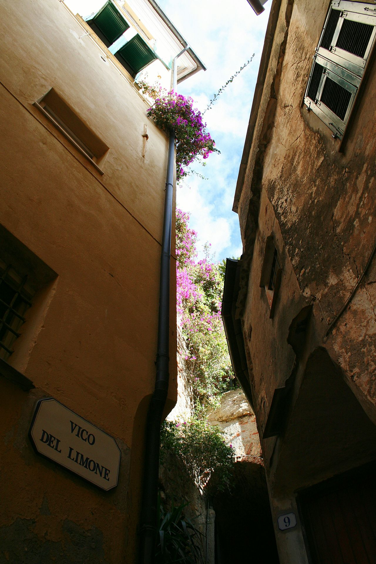 Built Structure Multi Colored Building Exterior Architecture Sky Outdoors Day Flower Mediterranean Mood Narrow Street Vicolo Del Paese Blooming In The Street Travel Tourism Cervo Ligure Growth Sunlight Travel Destinations Liguria,Italy Mediterranean Village Italian Village  Medieval Architectural Details Old Buildings EyeEmNewHere The City Light