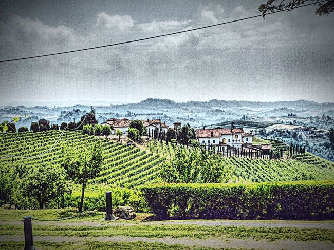 Italy🇮🇹 Barolo Wineyards Wine Tasting Architecture Built Structure Building Exterior House Residential Structure High Angle View Field Agriculture Rural Scene Tree Landscape In A Row Sky Farm Tranquil Scene Cloud - Sky Scenics Vineyard Tranquility