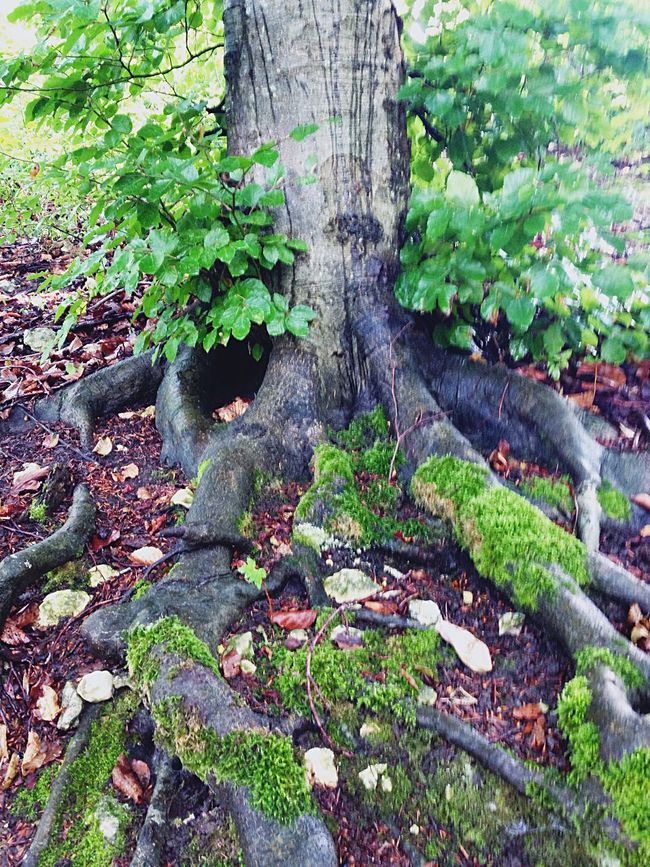 Deep roots are not reached by the frost Middle Earth Nature