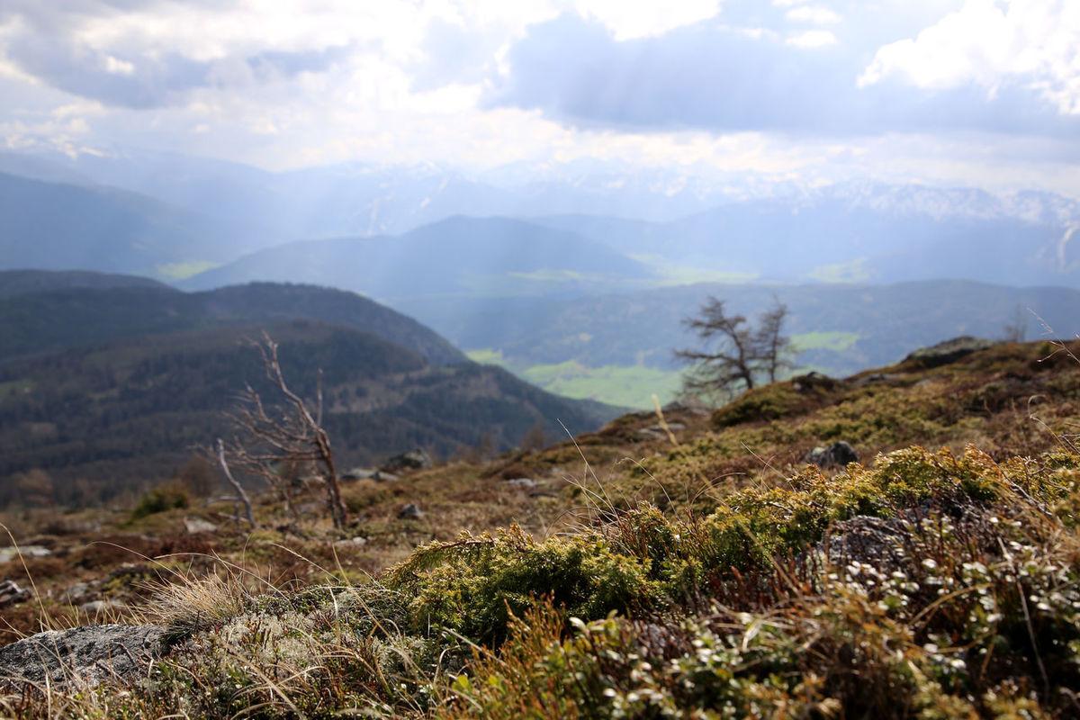 bergwiese mit blick ins tal Almwiese Adventure Hochwiese Leisure Activity Landscape Mountain Range Schneebedeckt Snowcapped Mountain Wandern Im Lungau Wegmarkierung Sankt Michael Im Lungau Österreich Österreich In Österreich Genießen Austria