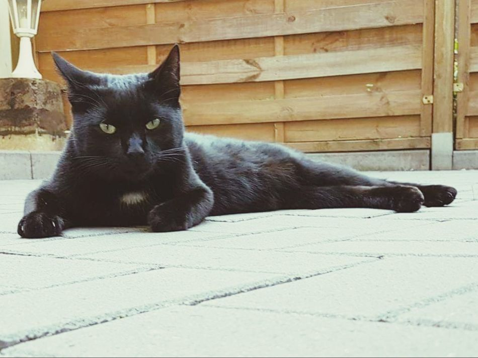 Black Color Outdoors Day Nature Cat BLackCat Chilling