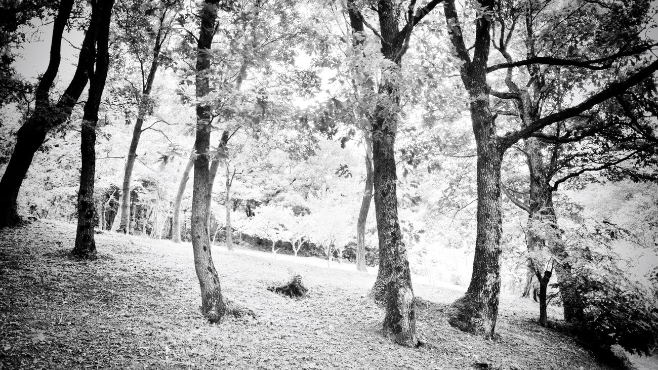 Nikon 1 V1 Blackandwhite Nature