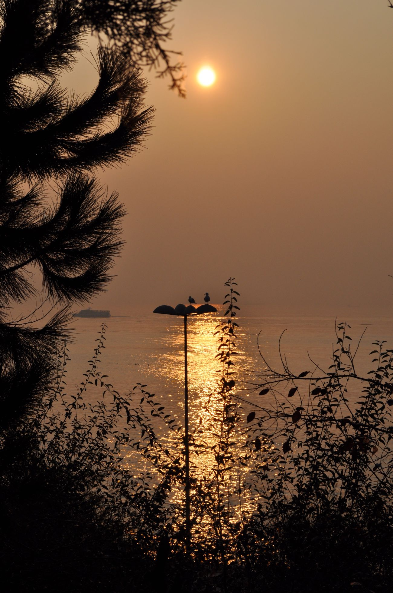 Sunset Water Nature Silhouette Reflection Scenics Tranquility Beauty In Nature Tree Tranquil Scene Sea Beach Outdoors No People Sky