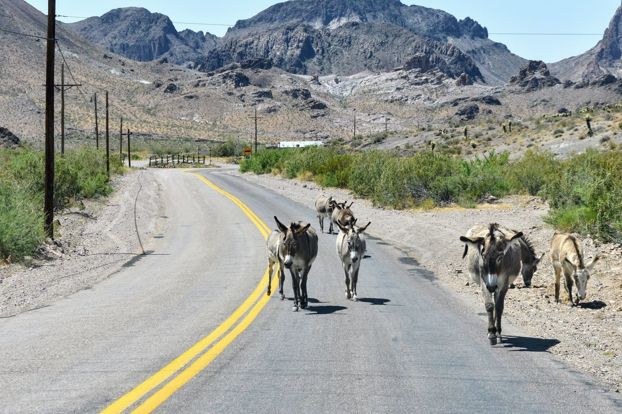 Road The Way Forward Animal Themes Domestic Animals Mountain Day Leading Mammal Outdoors Transportation Landscape One Animal Only Men Desert Adults Only People Adult Nature One Man Only burros