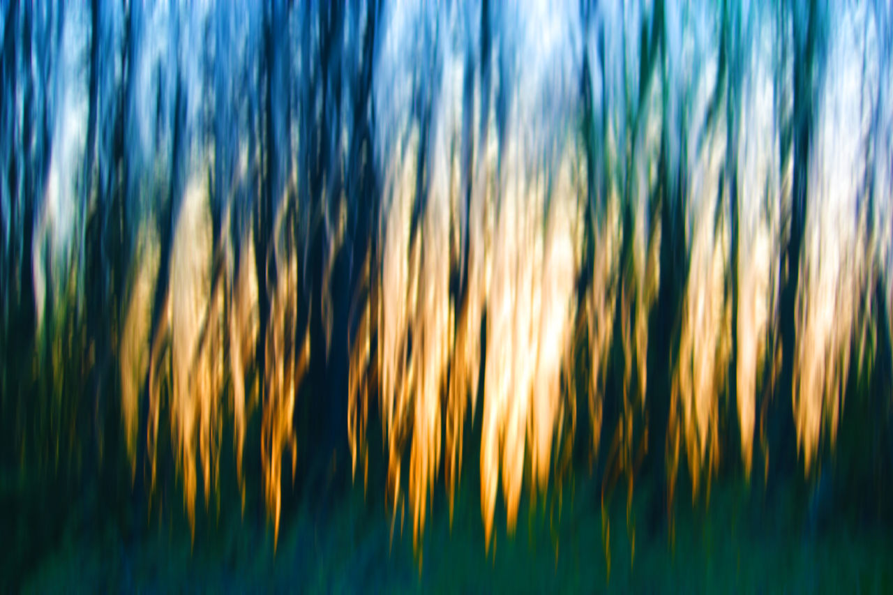 """Sunset in forest"" with long exposure and zooming/moving camera and a few adjustment in PS. Abstract Abstract Art Abstract Nature Abstract Photography Abstractart Abstractions Abstractions In Colors Backgrounds Color Explosion Creative Creative Light And Shadow Creative Photography Creative Shots Creativity EyeEm Best Edits Full Frame Getting Creative Getting Inspired Light And Shadow Long Exposure Longexposure Showing Imperfection Taking Photos Tranquility My Favorite Photo"