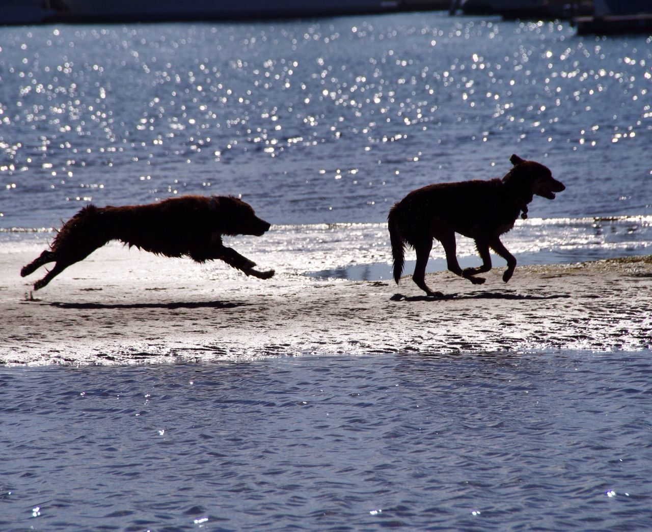 Two dogs looking playing with each other