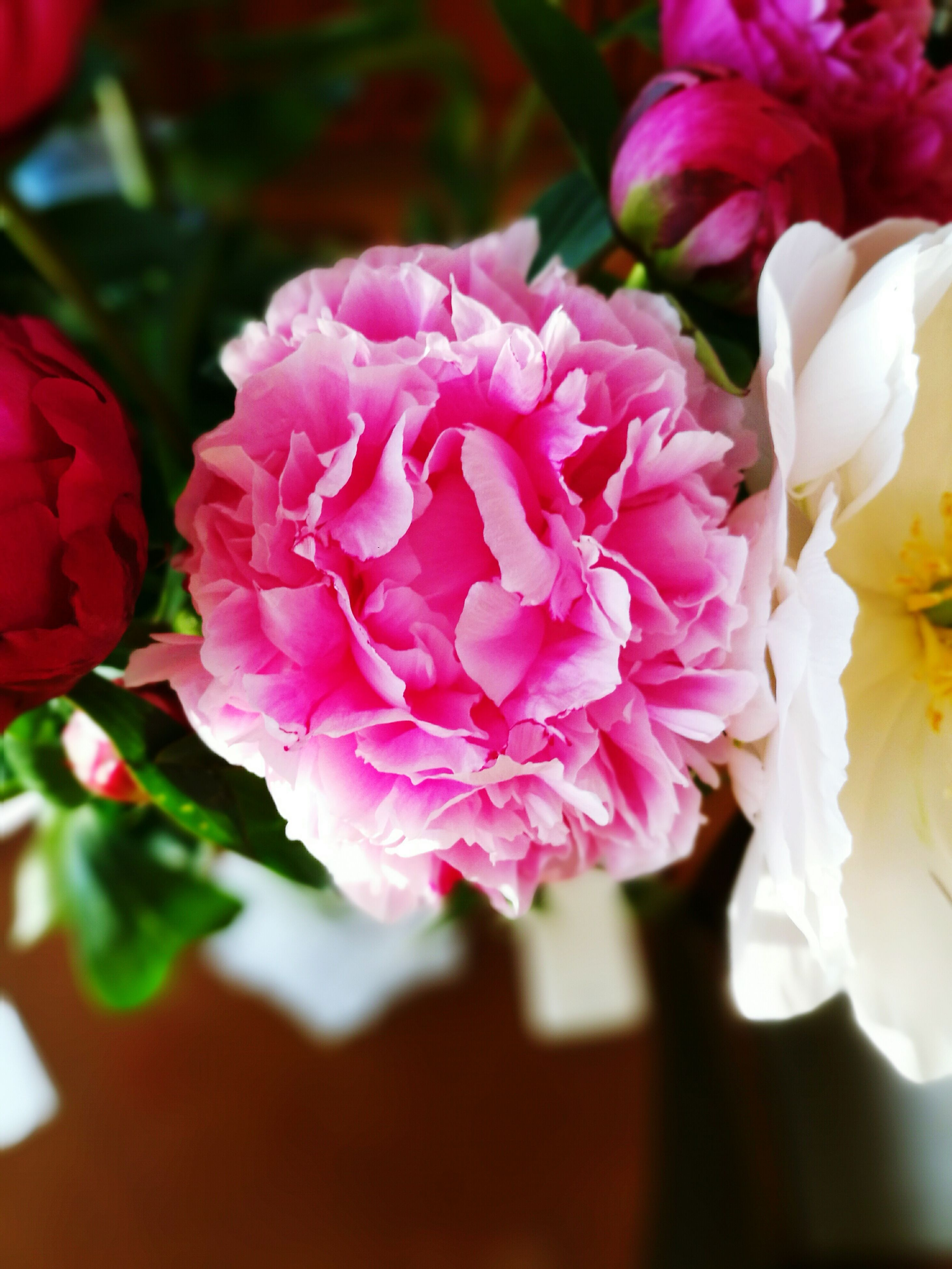 flower, freshness, petal, fragility, flower head, beauty in nature, growth, close-up, pink color, nature, blooming, bunch of flowers, rose - flower, blossom, focus on foreground, in bloom, pink, selective focus, white color, plant
