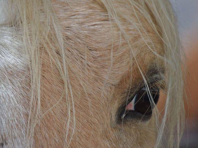 Blonde Blonde Beauty Eye EyeEm Best Shots EyeEm Nature Lover Eyem Eyes Palomino Pretty Pretty Girl Pretty♡