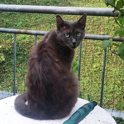 Guten Morgen vom Balkon! Die Katzencrew ist im Moment vor allem morgens und abends aktiv und versucht die heißen Stunden zu verpennen. Scheint mir sehr vernünftig. Tshaga_the_cat