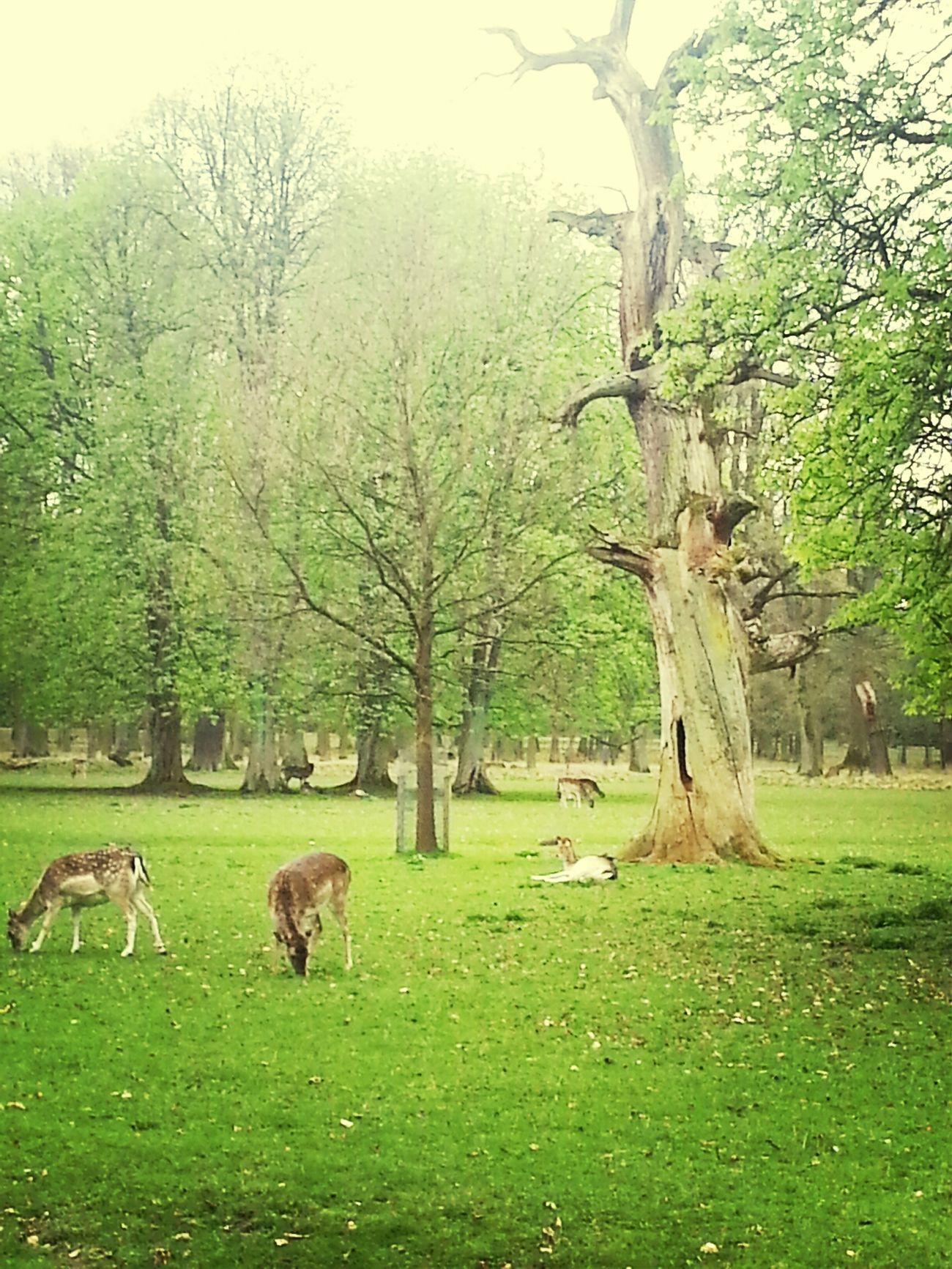 Tierpark Tiergarten