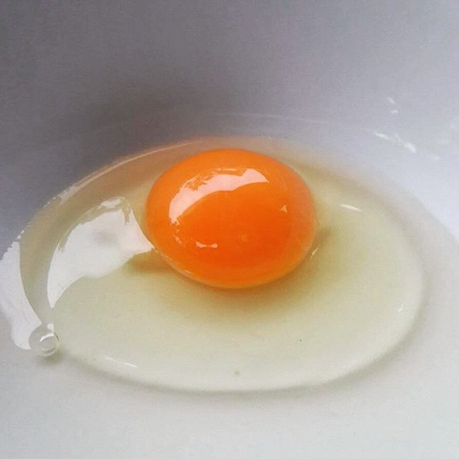 Fresh Egg Farmtotable Telling Stories Differently