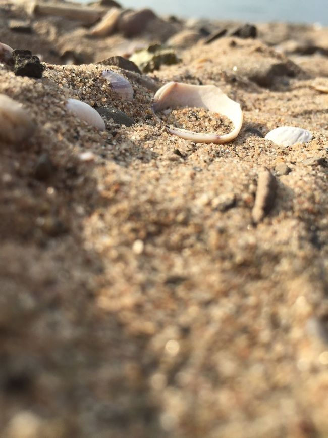 Color Palette Beach Rhine River Shell Sand Shore