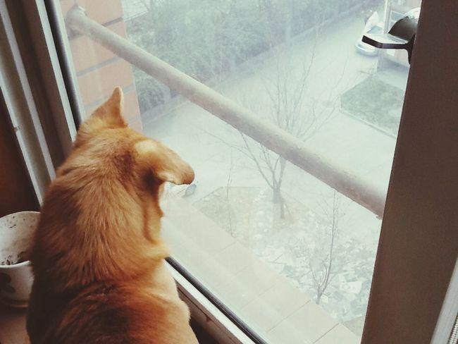 初雪的季节。
