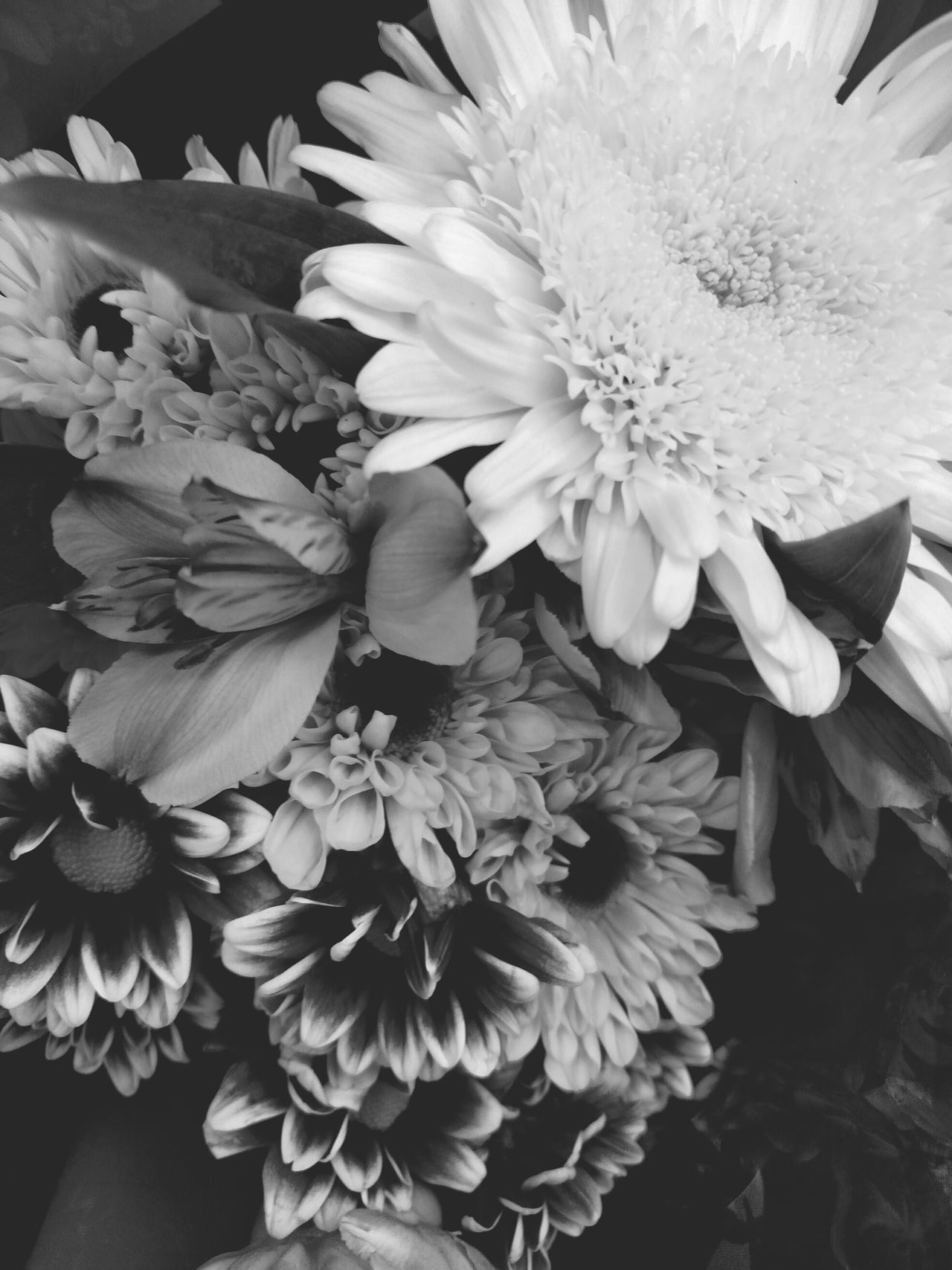 Flowerpower Flower Collection Flower Porn Flower Photography Things I Love Black And White Photography Black And White Flower Collection Black And White Collection  Eyeem Monochrome Monochrome _ Collection