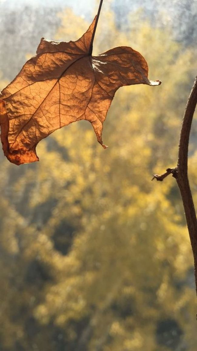 总是秋与冬 Enjoying The Sun
