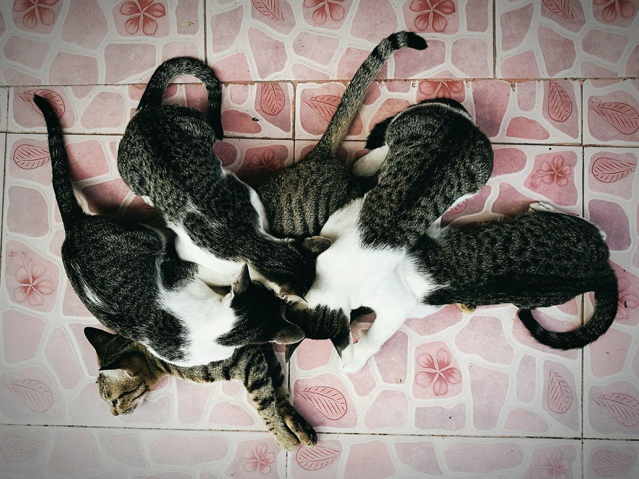 Milk time. First Eyeem Photo Kitten 🐱 Kitten Eating Milk Eating!  Cat Lovers Cat Family