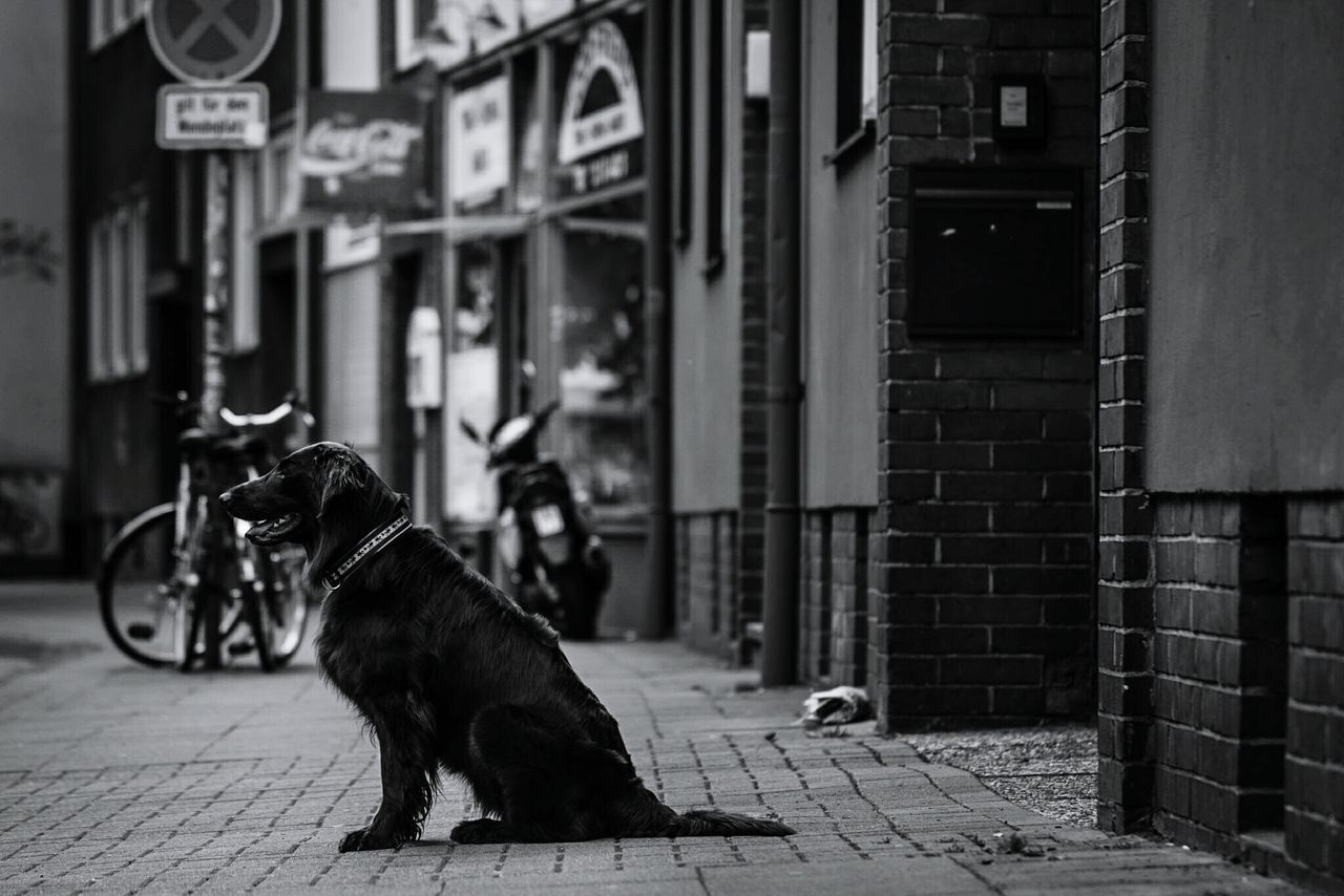 ~ 🐶⏳~ Dog Pets One Animal Domestic Animals Building Exterior Built Structure Street Animal Themes Outdoors Architecture No People Day City Monochrome The Street Photographer - 2017 EyeEm Awards Light And Shadow Blackandwhite Selective Focus Getting Inspired Streetphotography Waiting Spring Walking Around Mammal Black & White