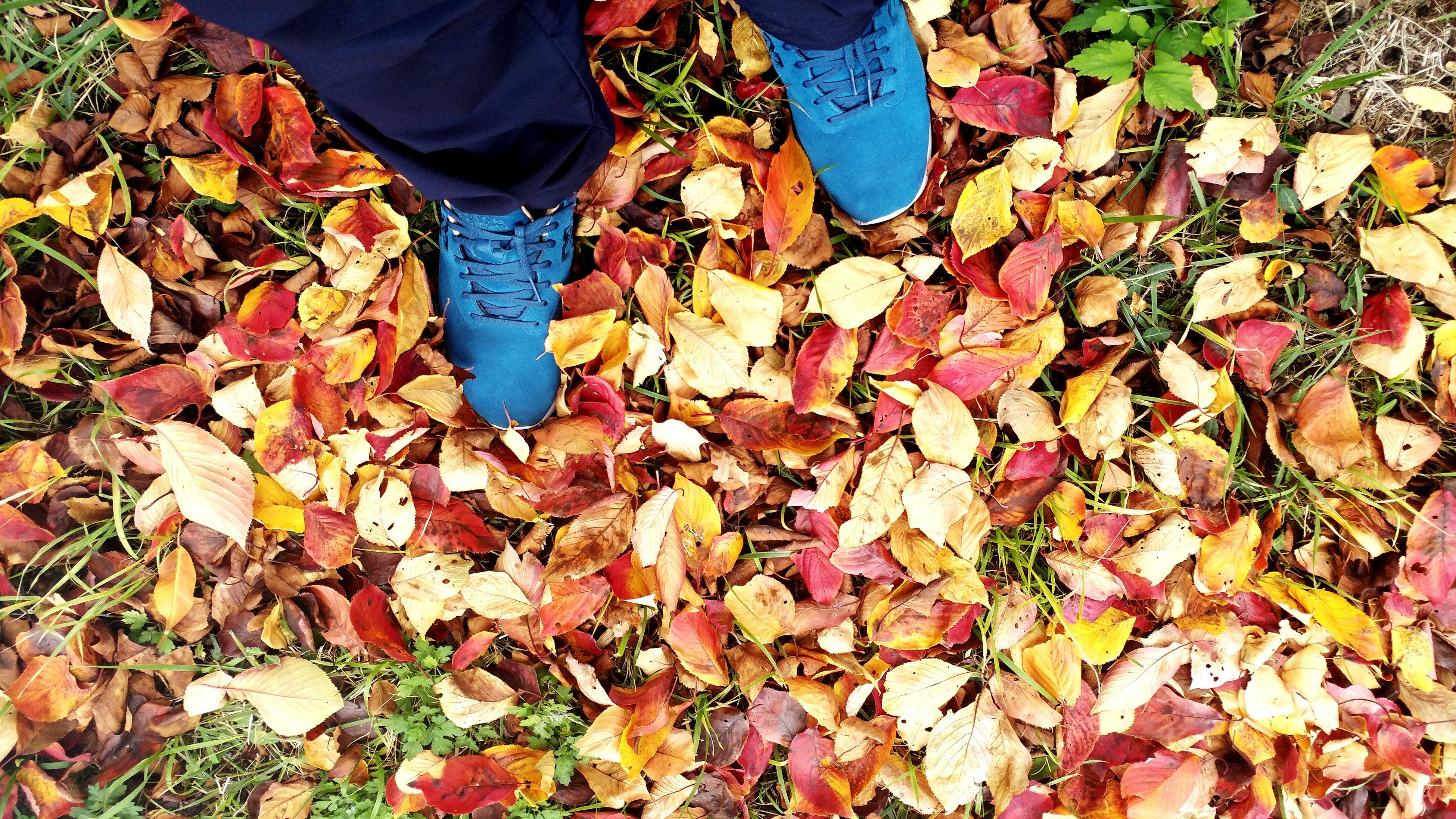 real people, autumn, abundance, leaf, low section, one person, outdoors, change, large group of objects, human leg, men, food, day, human body part, nature, beauty in nature, one man only, human hand
