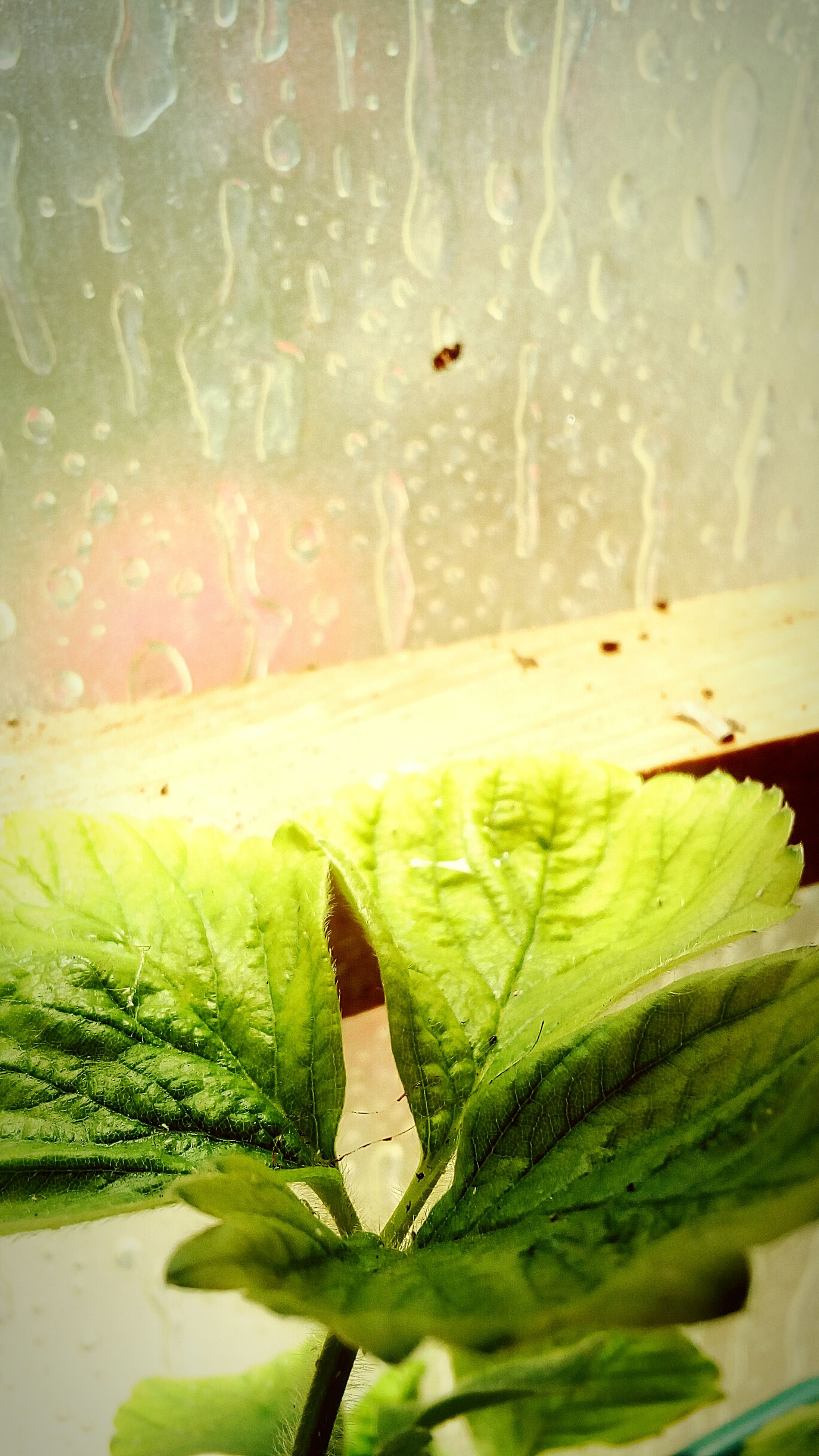 green color, leaf, drop, wet, water, freshness, plant, nature, no people, window, close-up, indoors, growth, raindrop, animal themes, day, beauty in nature, fragility