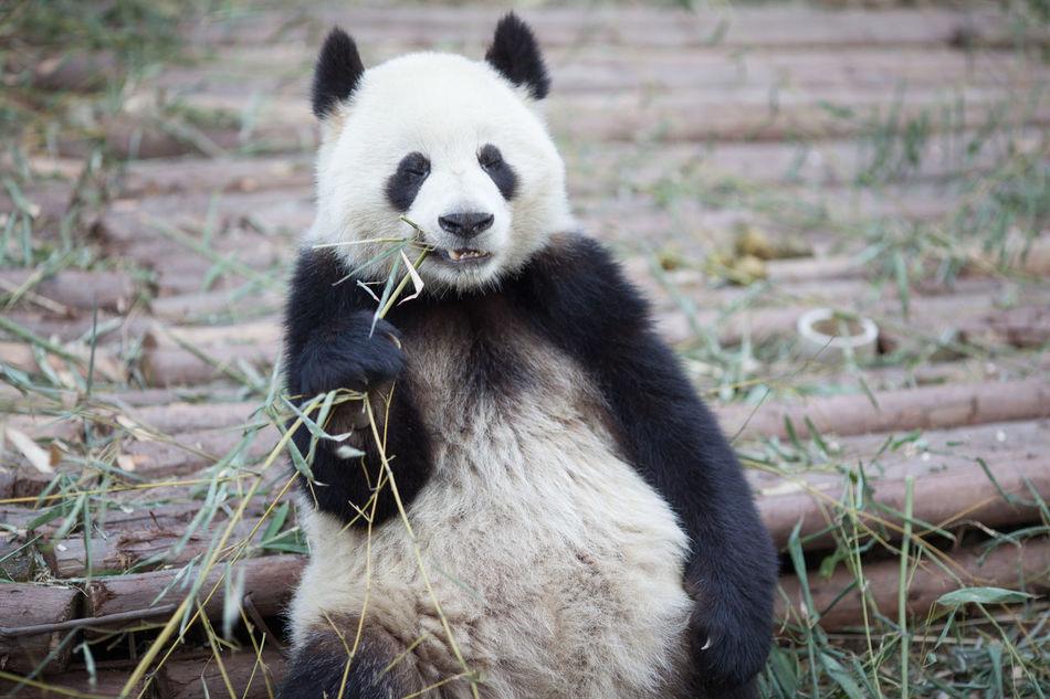 Beautiful stock photos of cute, Animal Behavior, Animal Hair, Animal Themes, Animals In The Wild