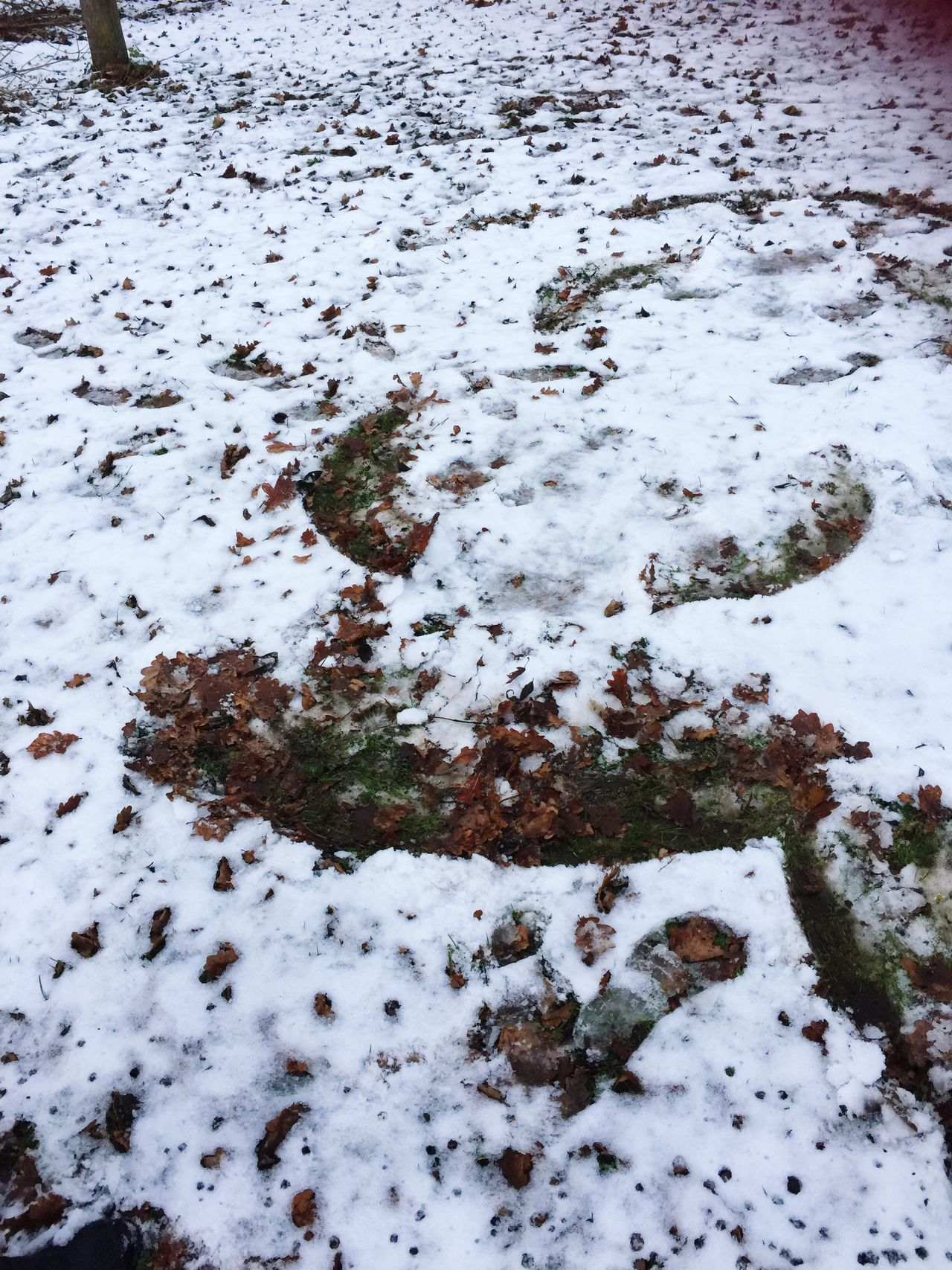 Winter Cold Temperature Snow Nature Frozen