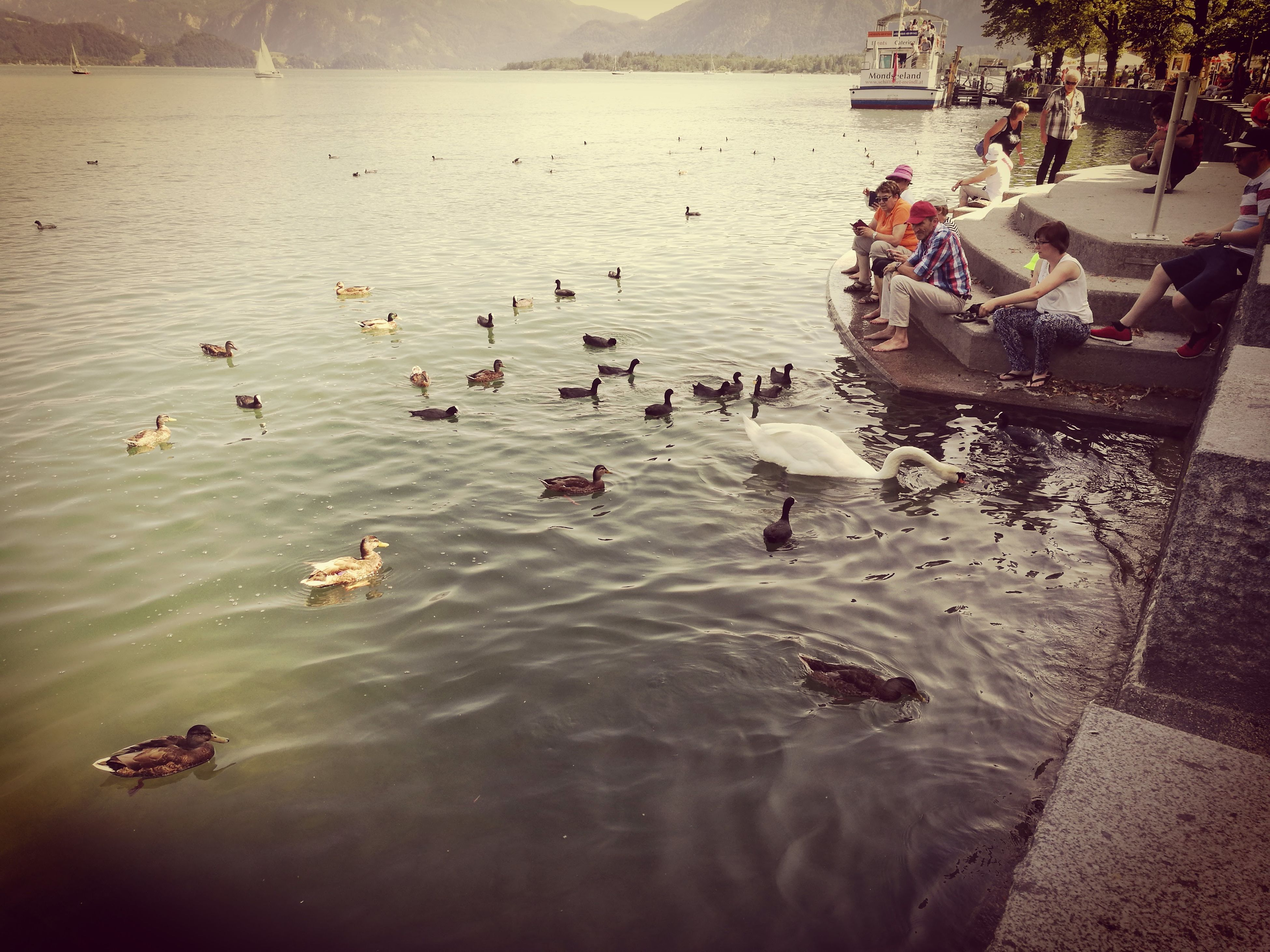 water, large group of people, bird, nautical vessel, animals in the wild, swimming, wildlife, mode of transport, nature, tranquility, day, non-urban scene, vacations, sea, crowd, waterfront