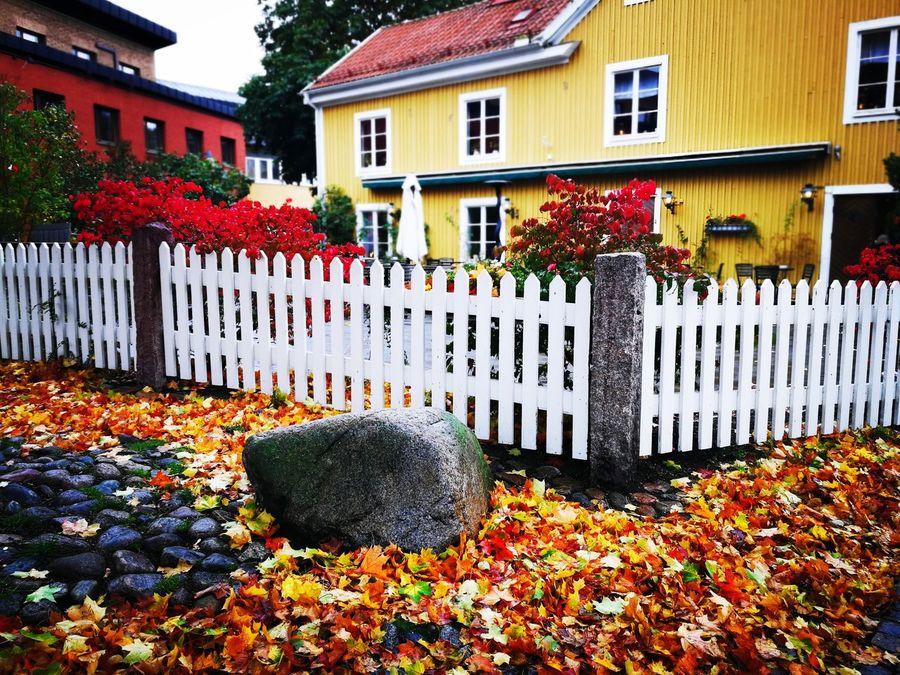 Autumn in Sweden Swedish Nature October Love Sweden ❤️
