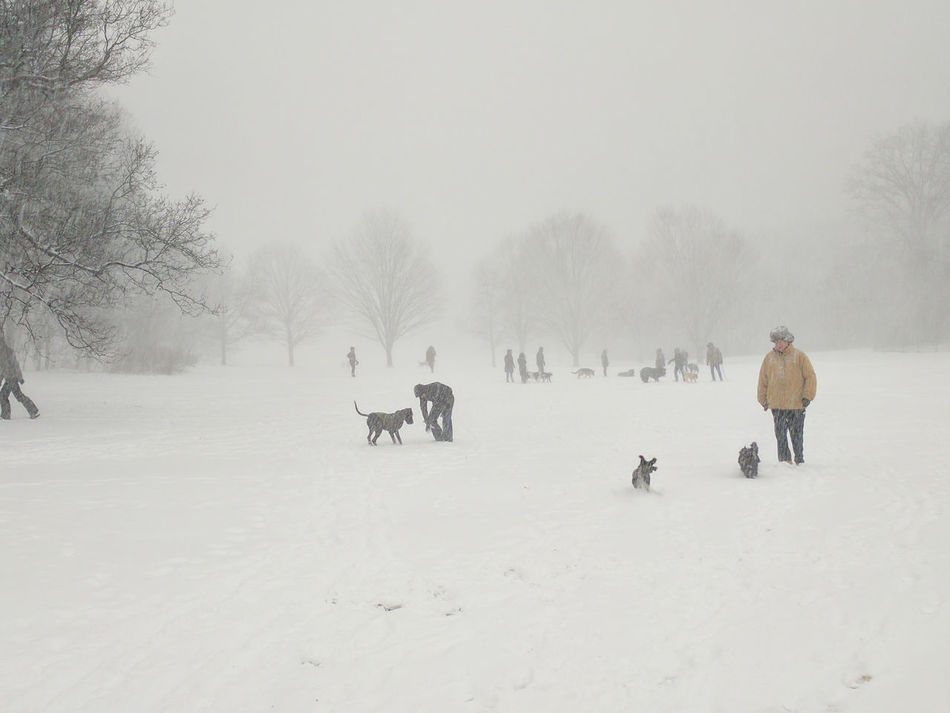 Almost Black&white Brooklyn City Park Dog Walking Dogs Nature Park Prospect Park Snow Snowscape Snowstorm2016 Trees Urban Nature White Whiteout Winter