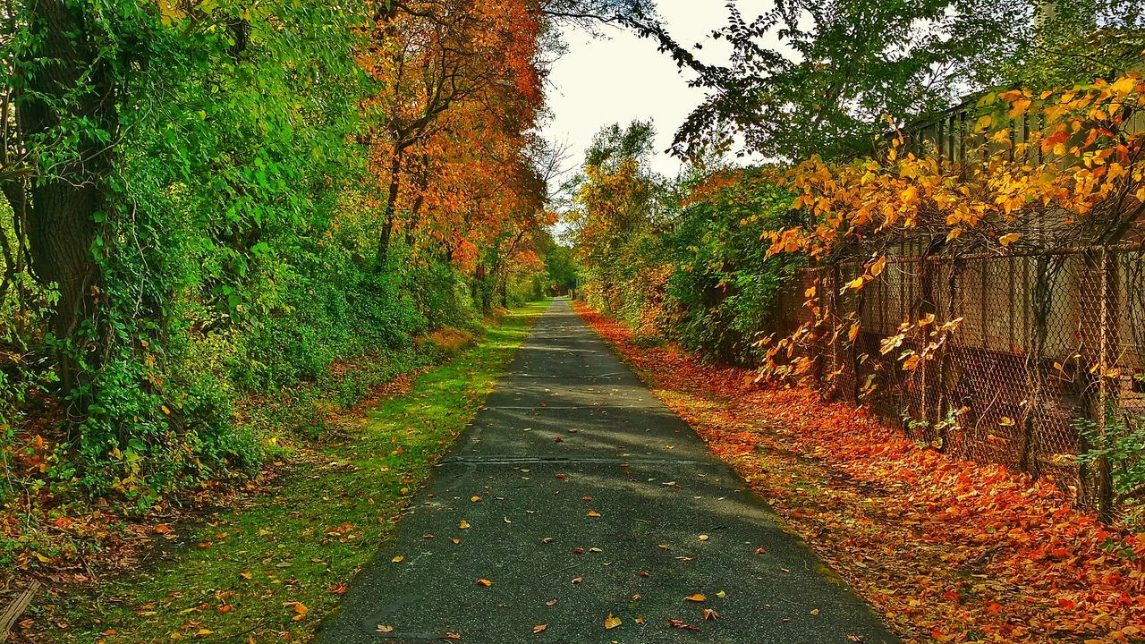 Discover Your City Bike Trail The Beauty Of Nature Peaceful Colors Colors Of Nature Leaves🌿 EyeEm Nature Lover Eyeem Photography