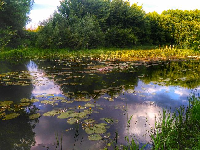 Bog Green Nature Silence Tranquility