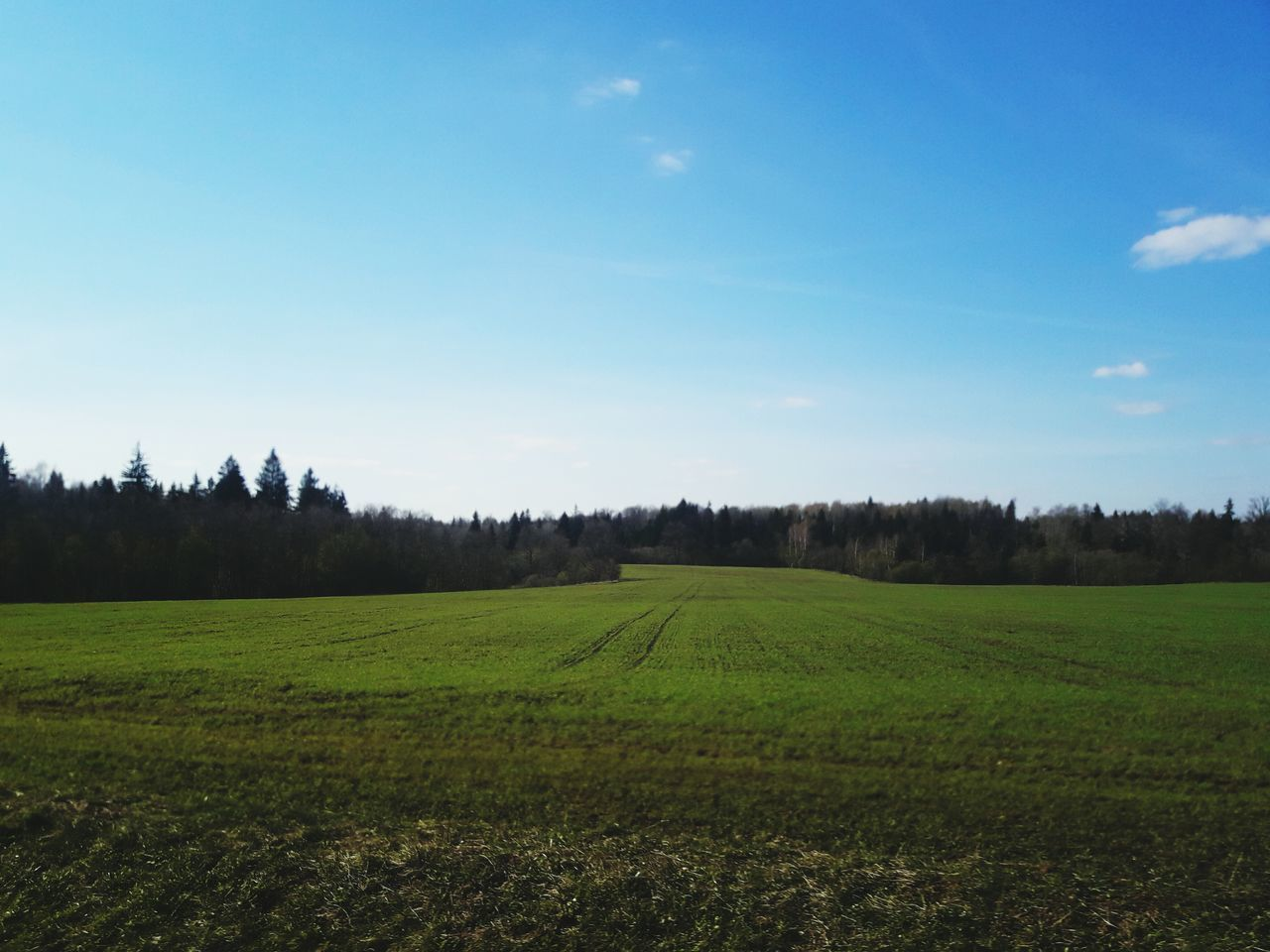 tranquil scene, tranquility, field, beauty in nature, landscape, nature, scenics, tree, no people, green color, agriculture, growth, grass, sky, day, outdoors, rural scene, clear sky, scenery