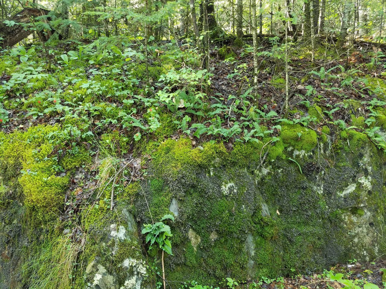 Moss Rock Outcrop Forest Roadside Undergrowth Color Palette