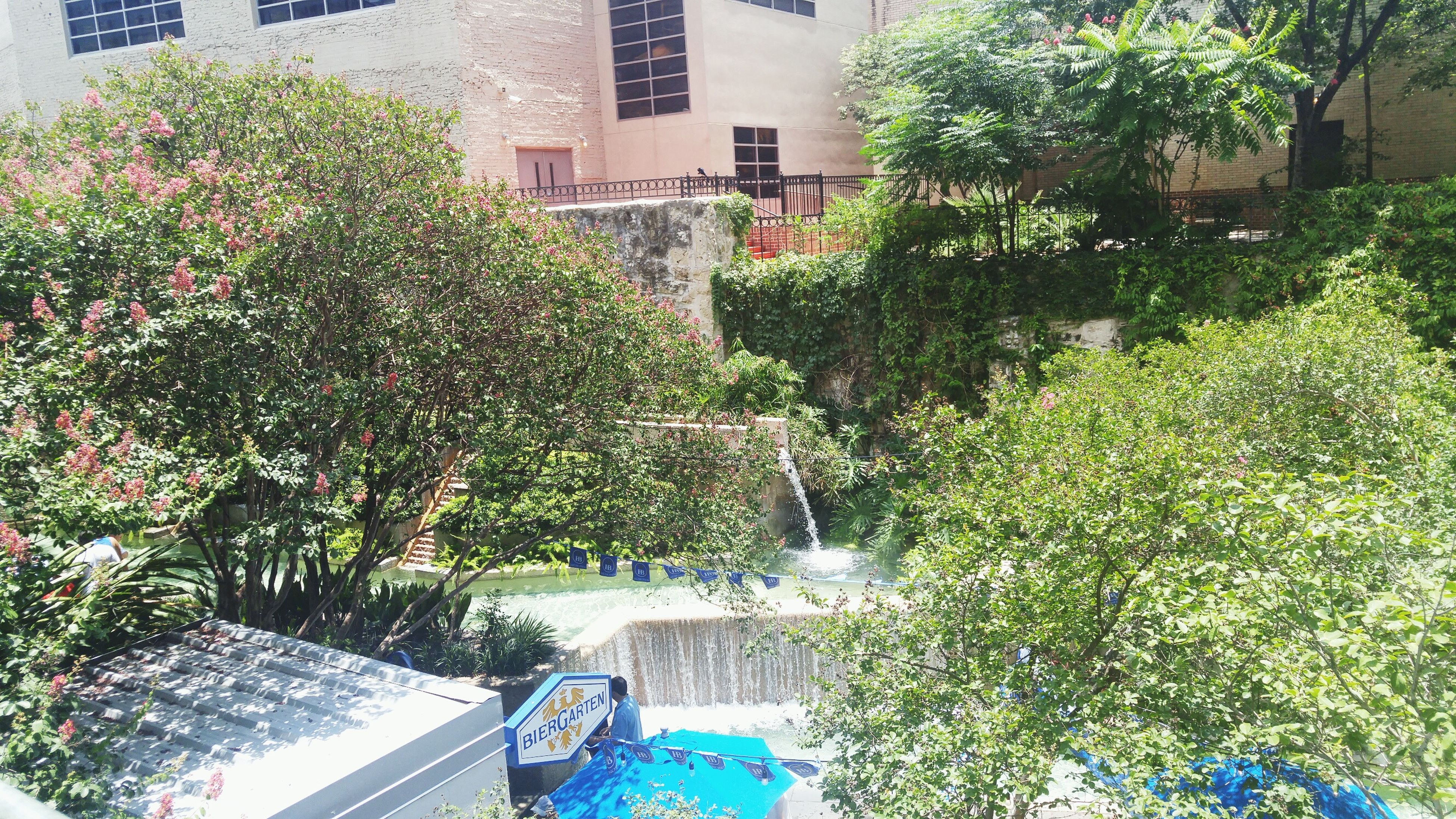 building exterior, architecture, built structure, tree, water, city, residential building, growth, house, plant, residential structure, canal, building, green color, high angle view, incidental people, outdoors, day, swimming pool, sunlight