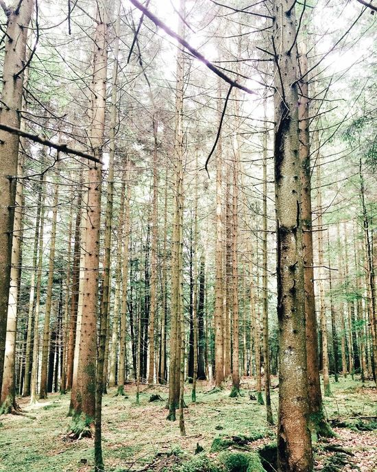 Trees everywhere. EyeEm Nature Lover EyeEm Best Shots Nature_collection Forest Wood - Material Naturelovers Nature Photography