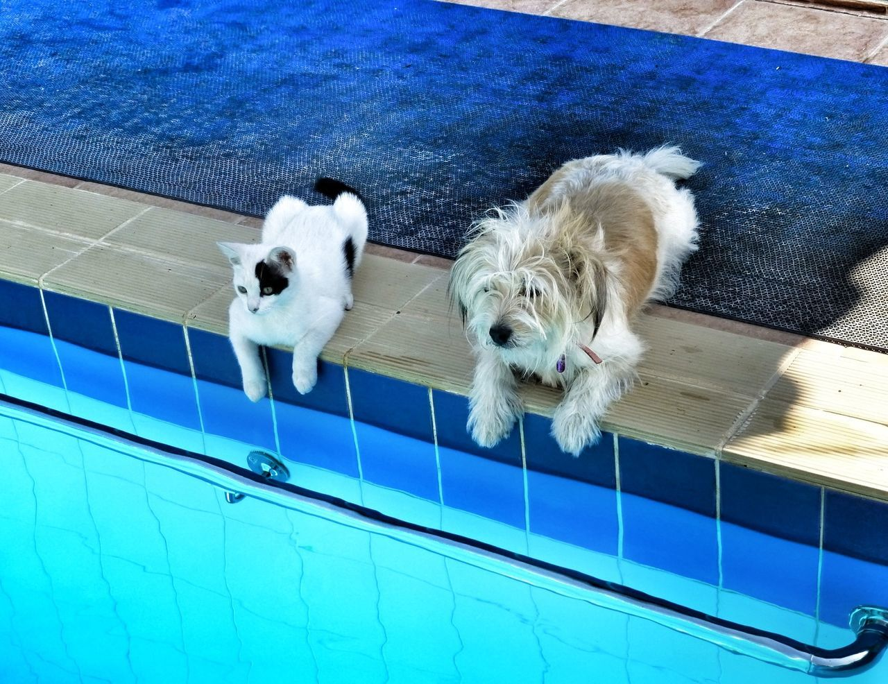 Cats And Dogs Can We Swim? Rhodes Rhodes Greece Cats Black And White Cat White Dog Blackandwhitecat We Are A Team ! Friends Friendship Hanging Out Hanging Out With Friends Blue Wave
