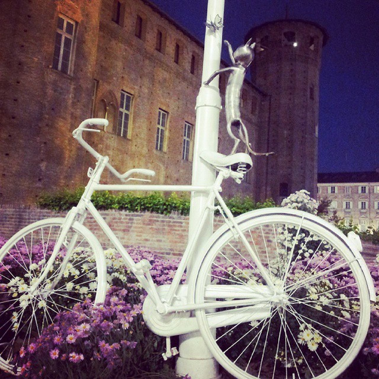 bicycle, architecture, building exterior, transportation, built structure, land vehicle, outdoors, wheel, mode of transport, no people, stationary, night, spoke, city, flower