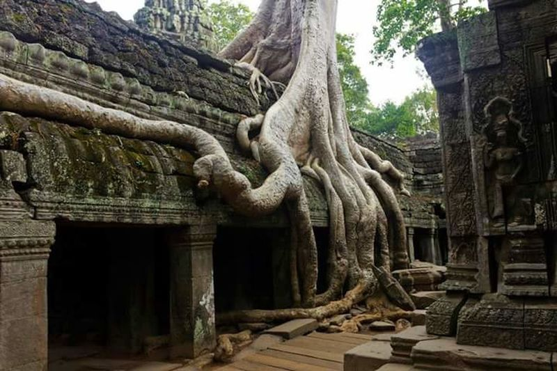 John Nelson Southeastasia Jungle History Doorway Worldheritage Temple Entrance Southeast Asia Cambodia Architecture Tomb Raider  Angkor Wat Nature Reclaiming Ta Prohm Lifeasiseeit Tree Pattern Pieces Lines And Shapes