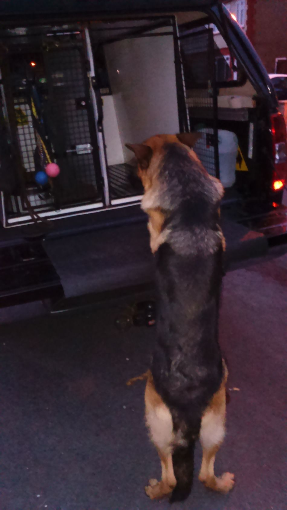 Shall I jump up! Domestic Animals Animal Themes One Animal Dog German Shepherd Standing Car Car Boot One Dog Night Night Shot Canine Outdoors