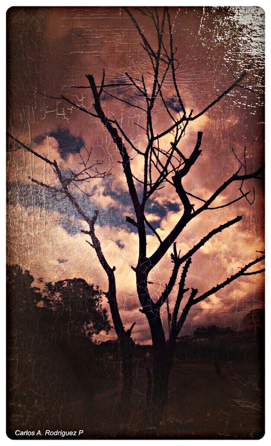 Taking Photos Pho.to.Lab App Tree No Edit No Fun