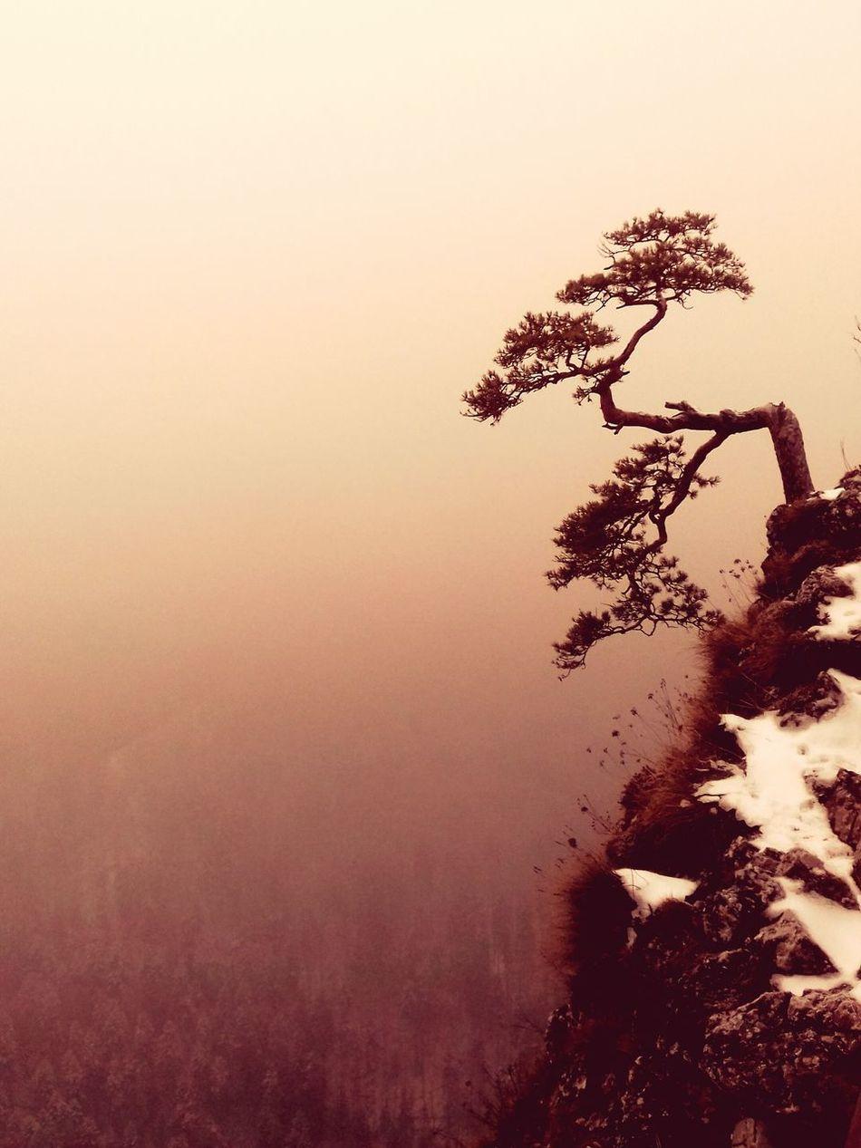 Tree Nature Outdoors Beauty In Nature Mountain Pine Tree Relict Winterwonderland Poland Nature Pieninski National Park Pieniny Poland